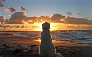 海邊坐著的思鄉狗狗圖片