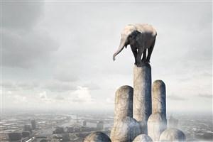 五指山上的大象圖片