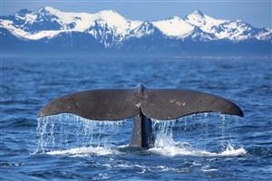 冰川海面鯨魚尾巴圖片
