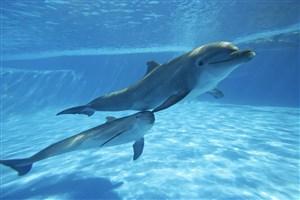 兩條深海里的海豚圖片