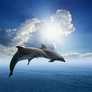 并齊兩條海豚圖片