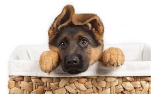 繞著耳朵的狗狗圖片