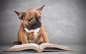 戴眼鏡的狗狗圖片