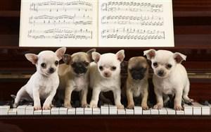 鋼琴上的狗狗圖片