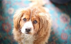 長耳朵狗狗圖片