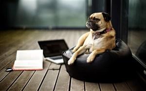躺沙發上的狗狗圖片