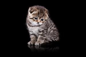 可憐巴巴的貓咪圖片