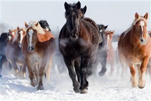 一群黑色黃色奔跑的駿馬圖片