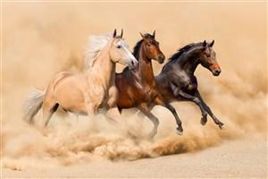 黃土上奔跑的駿馬圖片