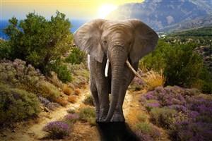唯美野生動物大象圖片