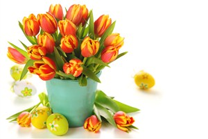一籃郁金香鮮花圖片