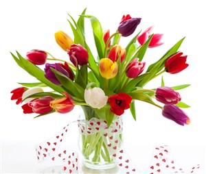 五顏六色郁金香鮮花圖片