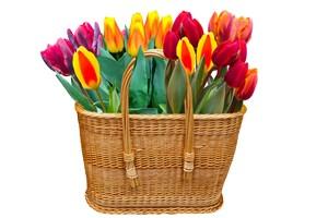 花籃里的郁金香鮮花
