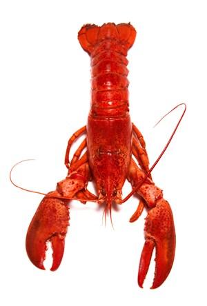 白底好抠图小龙虾海鲜美食图片