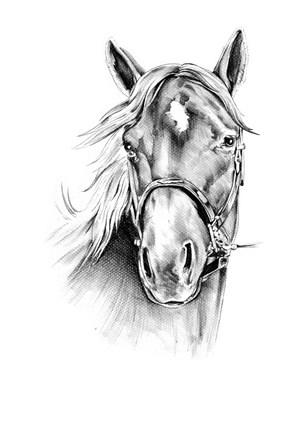 灰色馬頭正面高清圖片