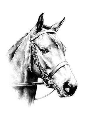 灰色馬頭側面高清圖片