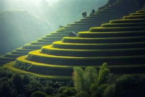 绿色生态农业梯田整齐阳光希望生长收获乡村