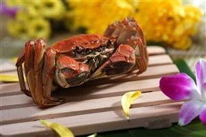 木盤上的大閘蟹