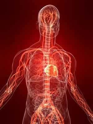 人體血管圖片