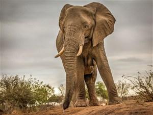 唯美野生动物山顶上的大象图片