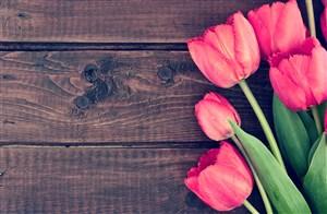 木板上的粉色郁金香鲜花图片