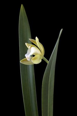 超高清蘭花鮮花攝影