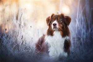 梦幻森林间可爱狗狗图片