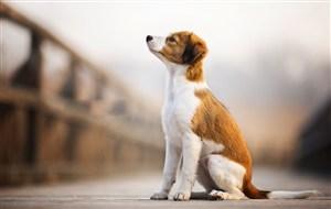 蹲坐的可爱狗狗图片