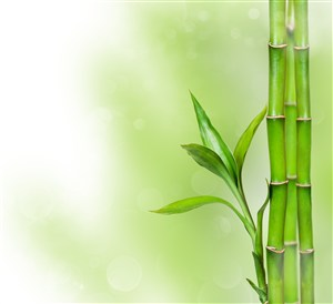 高清唯美竹子风景图片