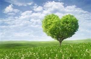 愛心樹草原風景圖片