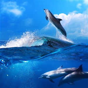 唯美藍天大海下的海豚高清