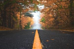 黄色旅游时尚自然秋天公路