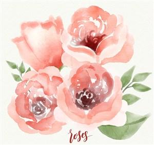 水彩绘4朵粉色玫瑰花矢量素材