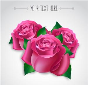 3朵粉色玫瑰花矢量素材