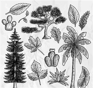14款手绘植物和树叶设计矢量图